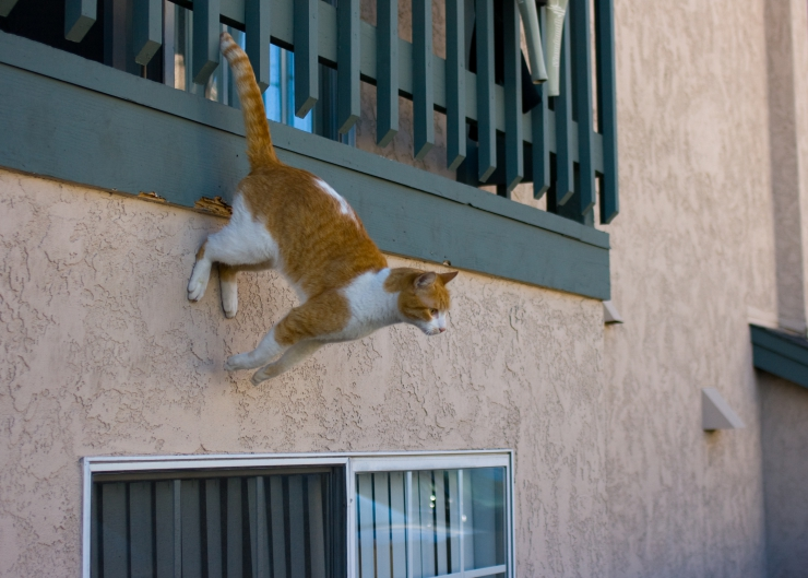 High Rise Syndrome Keeping Your Cat Safe From Falls